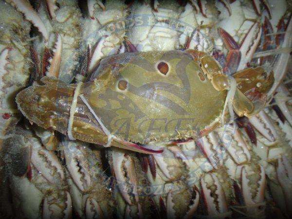 3spot crab