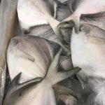 Silver Pomfret Available