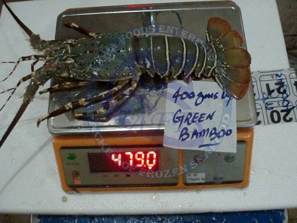 Mud Spiny Lobster